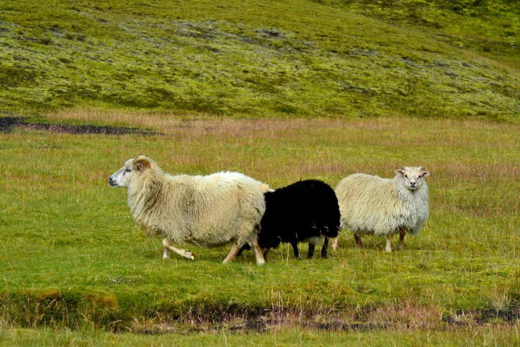 Tusker Iceland Adventure (35)