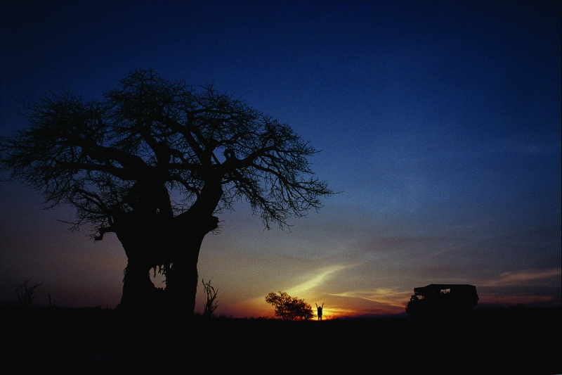 Baobab Tree Sunset