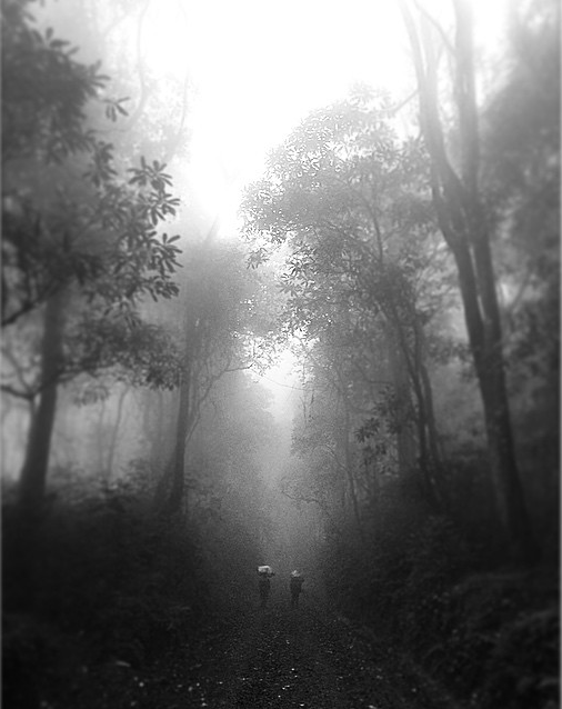 Rain forest on Kilimanjaro - By Troy Paff