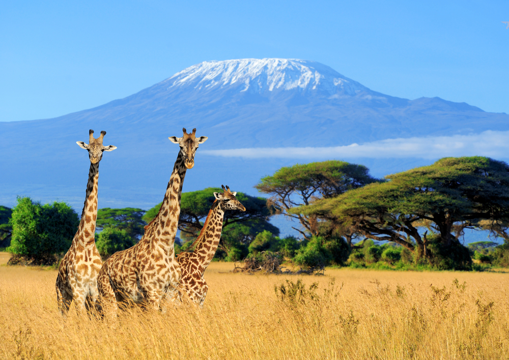 Kilimanjaro-facts-wildlife